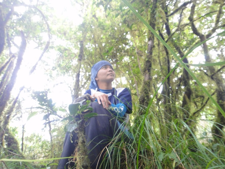 The Mossy Forest at the Mt. Piagayungan Peak