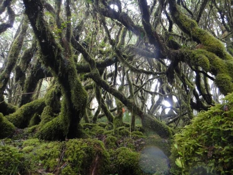 Mt. Piagayungan Summit Forest