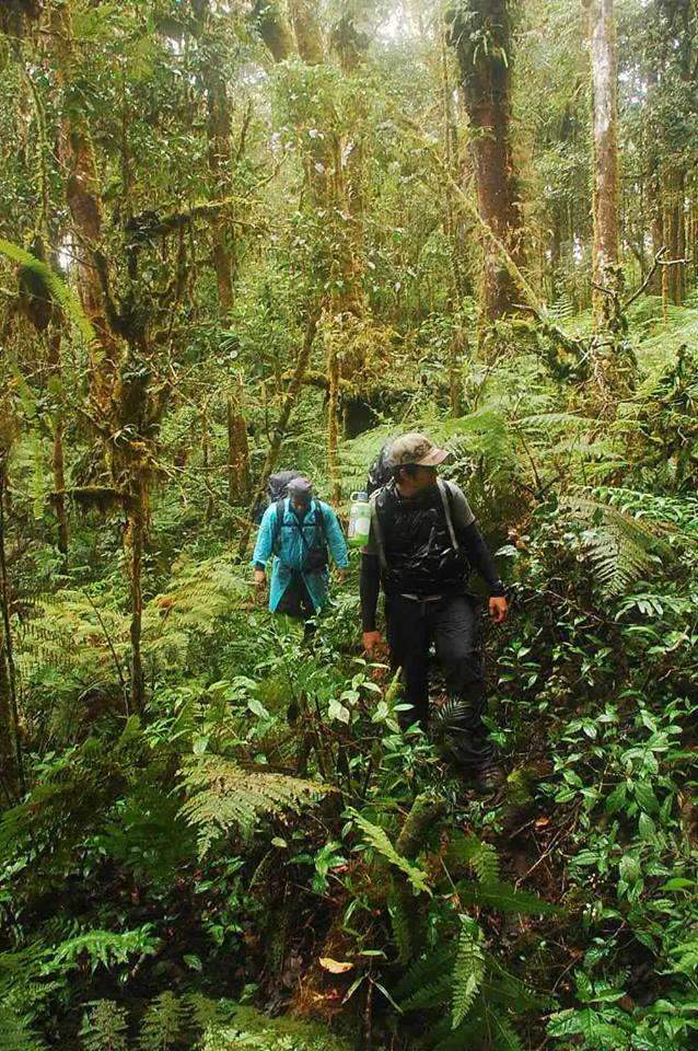 Healthy Forest of Mt. Piagayungan